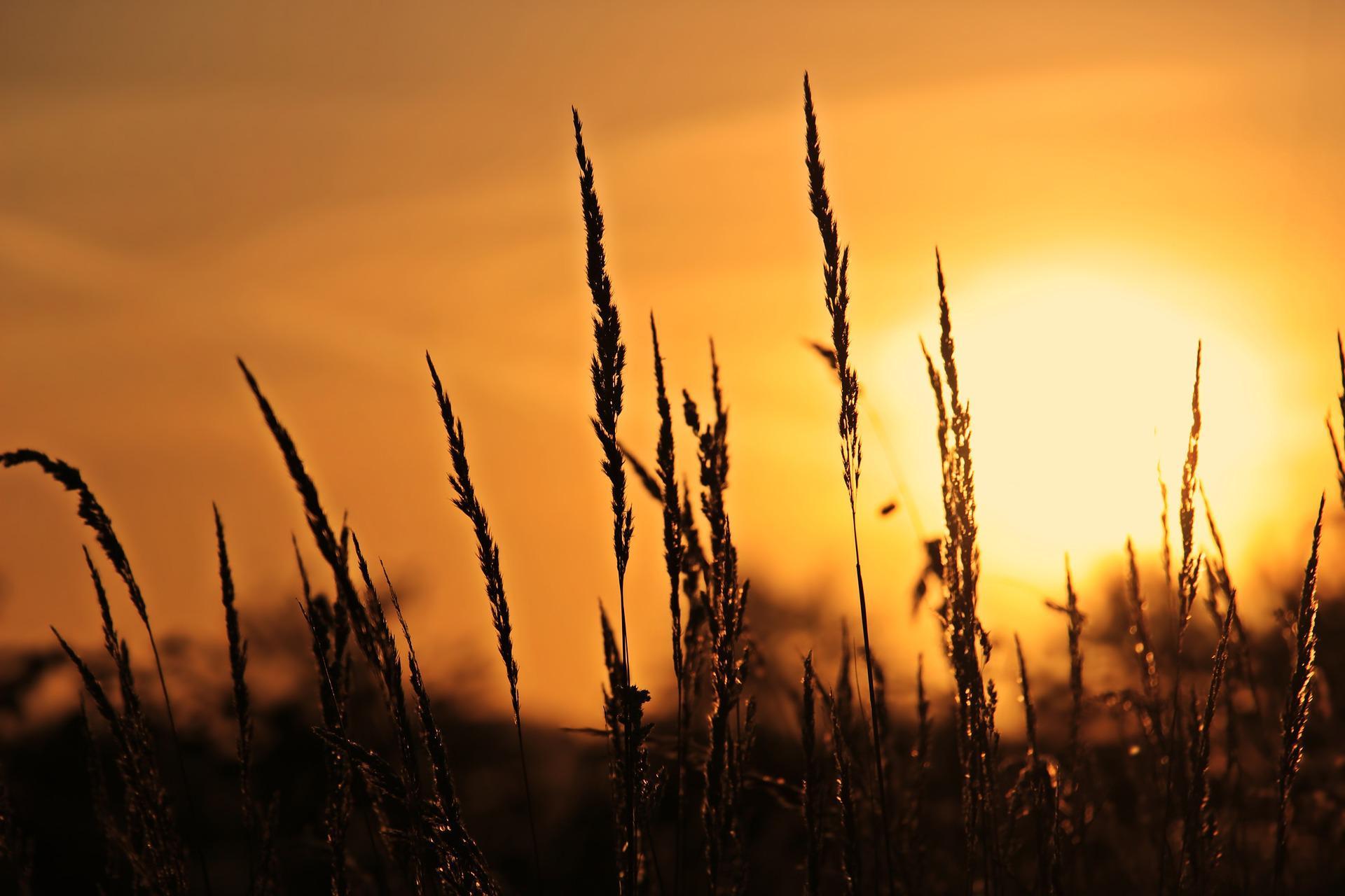 Centro-Oeste: confira as tendências do tempo para inverno e primavera