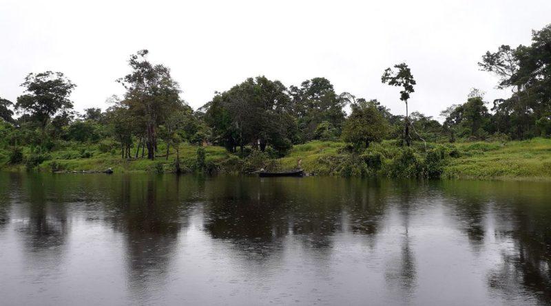 Embrapa coleta bactérias e fungos com potencial econômico na Amazônia