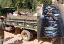 SEMA de Alta Floresta (MT) e Polícia Civil de Paranaíta (MT) apreendem mais de 87 quilos de pescado irregular e aplicam R$ 6.800,00 em multas