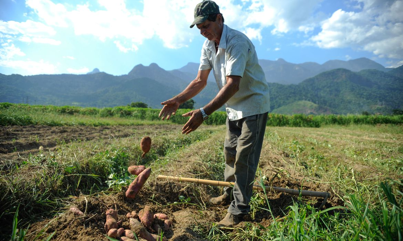 Número de empregados na agricultura fica normalizado
