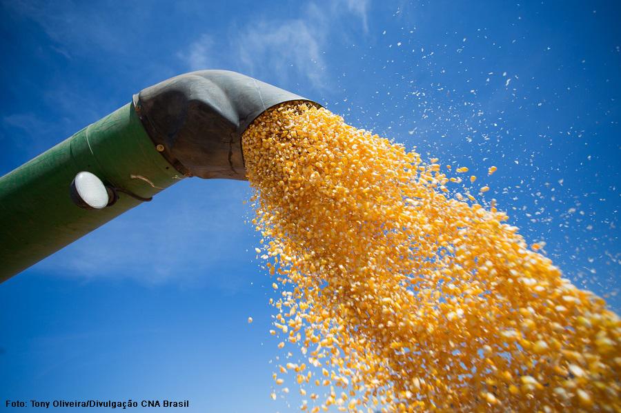 Produção de soja e aumento da área de milho impulsionam supersafra de grãos