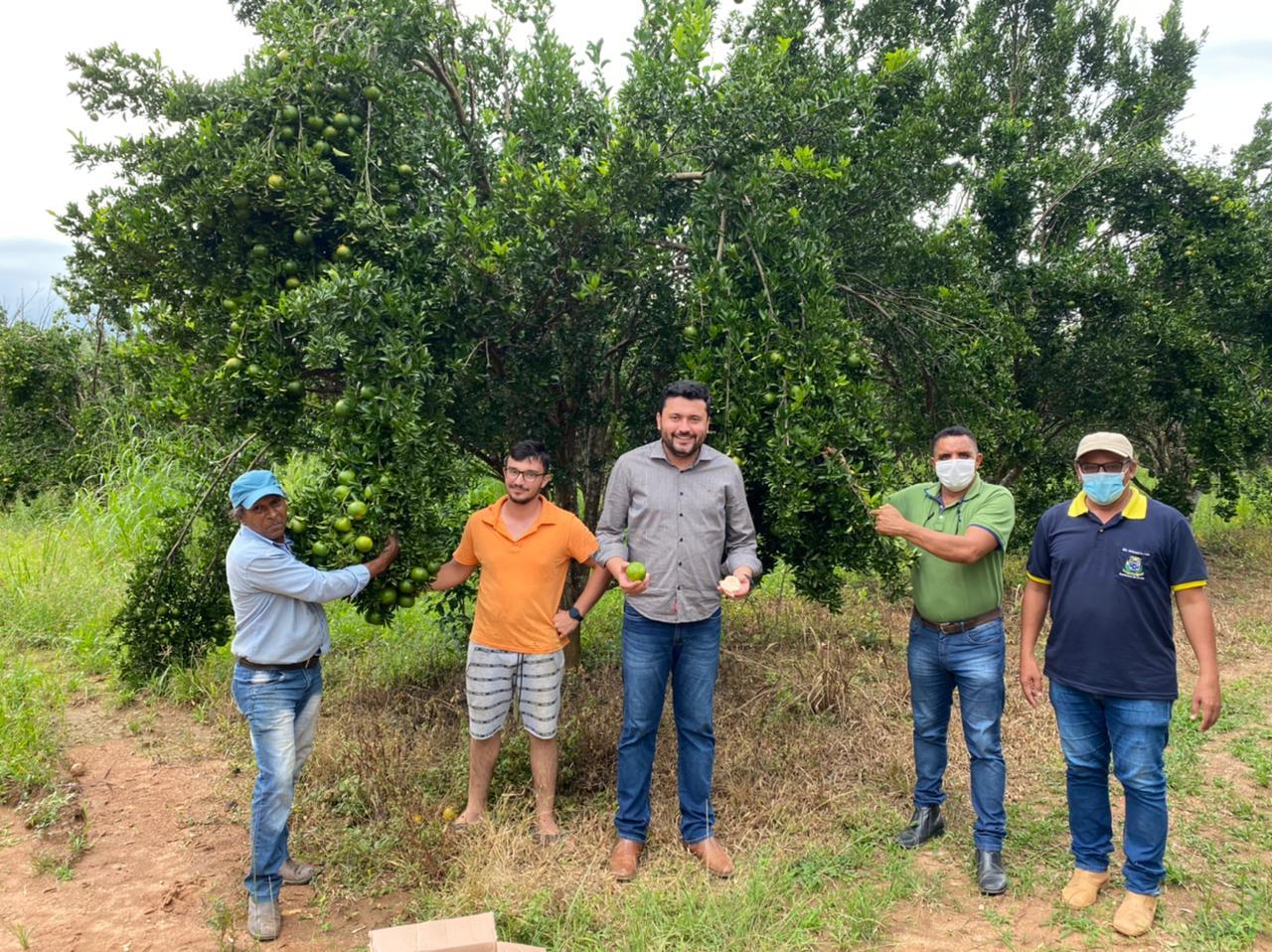 Agricultura familiar investe em produção de citros em Colíder (MT)