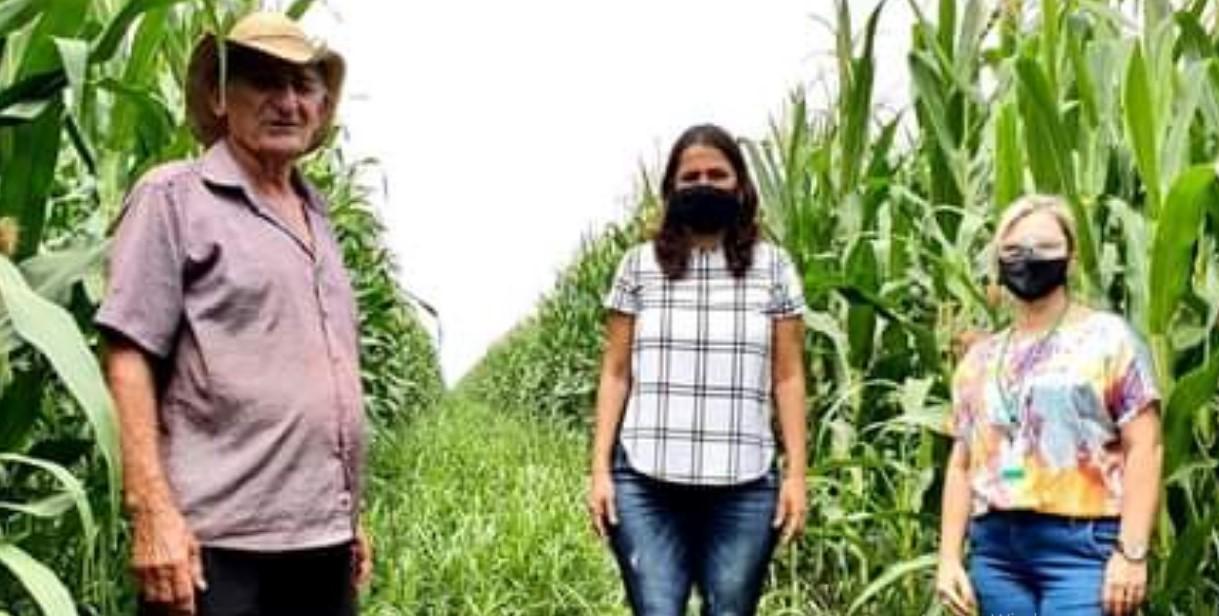 Em Guarantã do Norte (MT), Secretaria de Agricultura e equipe da SEDEC visitam propriedade do Sr° Zanon e conhecem técnicas bem sucedidas de plantio de milho