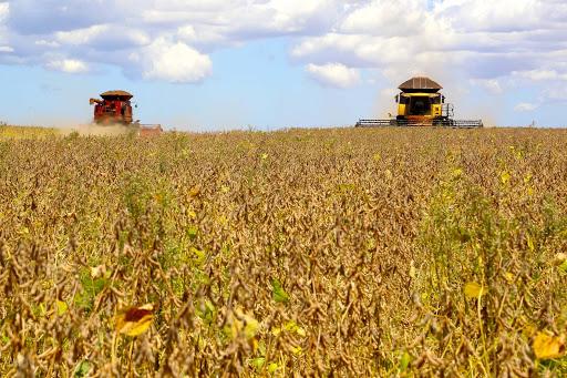 Colheita da soja chega a 95,1% no Brasil! Até agora, 6 estados terminaram