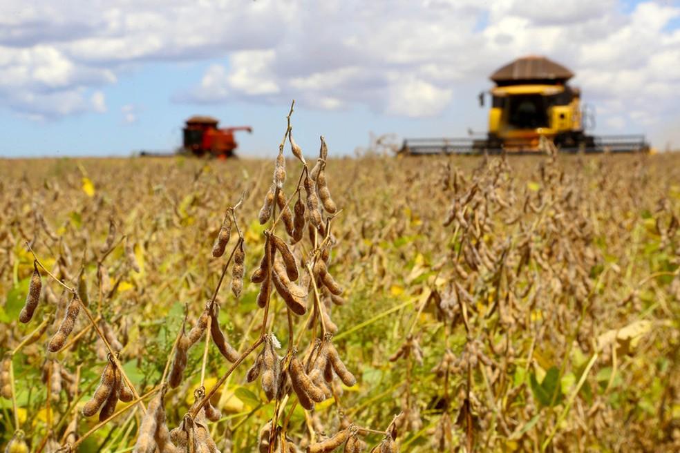 Dólar em queda pressiona cotações da soja e milho