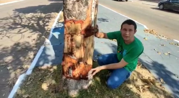 Anelamento de árvores no centro de Colíder (MT) é analisado pela Ong Carapá Vivo