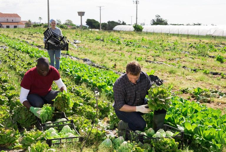 Mapa prepara novo cadastro nacional para registro de agricultores familiares