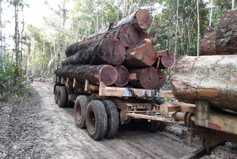 Fiscais da Sema-MT flagram desmatamento ilegal em Unidades de Conservação em MT