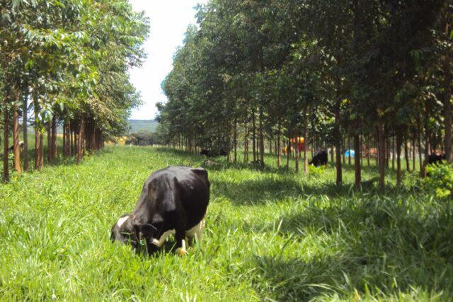 Produção de carne na Amazônia pode crescer poupando área e recursos, aponta estudo