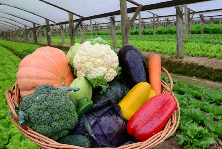 Consumo de alimentos orgânicos cresce mais de 50% no Brasil