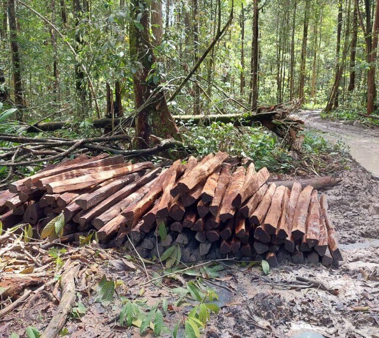 Exploração ilegal de florestas aumenta 10% em um ano em MT, diz estudo