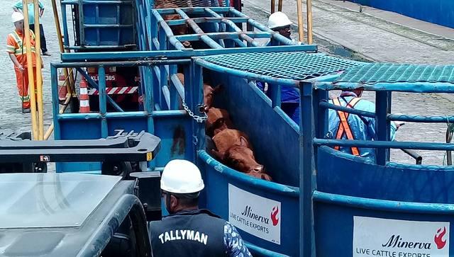 Projeto de lei quer proibir exportação de gado vivo do Brasil
