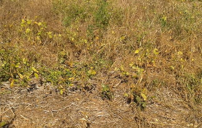Indea fiscaliza mais de 6 mil propriedades rurais em MT